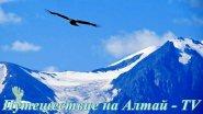 Полет Коршуна в Курайской степи на Алтае.