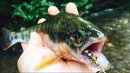 Горная рыбалка на реках Приморья