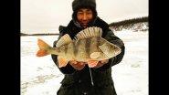 Утренний клев окуня Якутия Yakutia