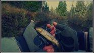 Форелевая рыбалка. По лесным речкам в октябре .Встреча с лосем.