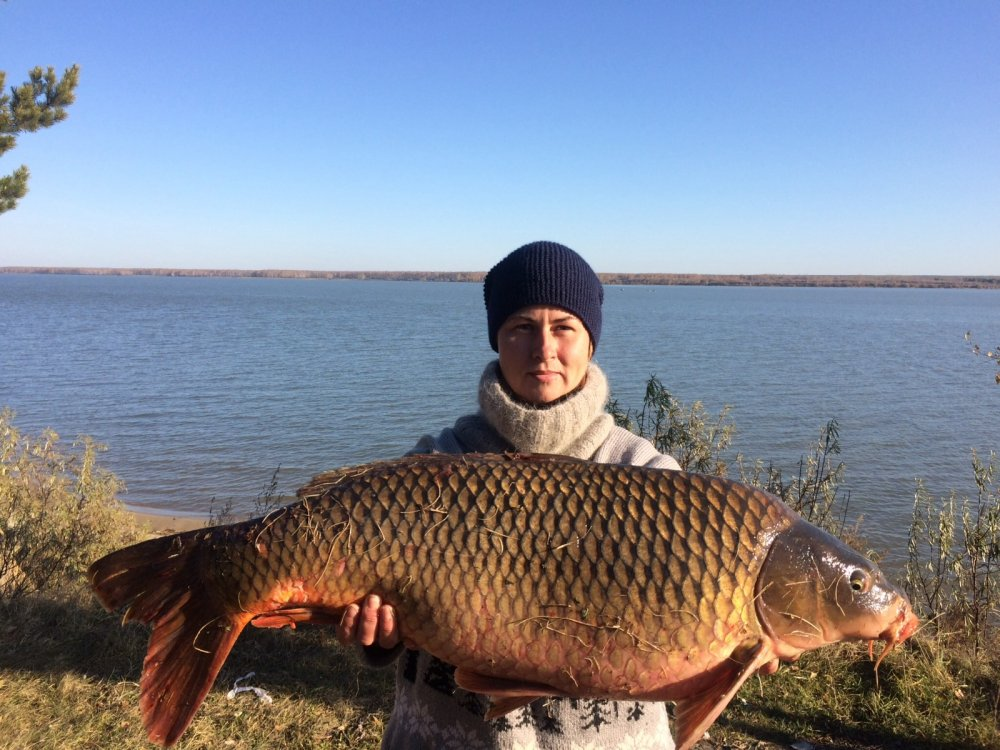 Сазанька 10,3 кг