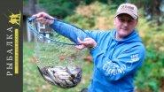 Рыбалка в Финляндии на фидер . Часть вторая - одолела плотва