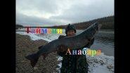 Таймени и алмазы реки Анабар! Якутия Yakutia