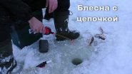 Зимняя ловля окуня на блесну с цепочкой с одной лунки.