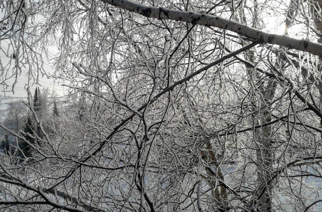 Зимние кружева