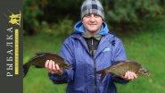 Как перехитрить плотву и поймать леща? Рыбалка в Финляндии на фидер. Часть 3