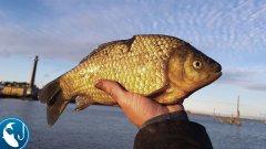 Ловля морского карася на фидер в ноябре. Фидер поздней осенью | Рыбалка с Родионом