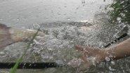 Моя рыбалка 3-16. Карп, белый амур.