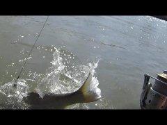 Моя рыбалка 4-16. Карп, белый амур.