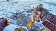 Фартовая лунка или уловистый балансир? Зимняя рыбалка 2017 ЛОВЛЯ ОКУНЯ ЗИМОЙ