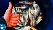 Ловля осенней плотвы на фидер. Рыбалка на #фидер в ноябре. Готовим на рыбалке | Рыбалка с Родионом