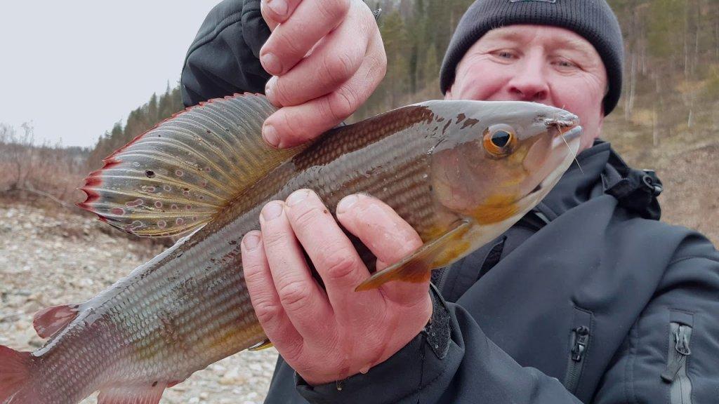 Здоровенный хариус   Осенняя рыбалка 2017 г.