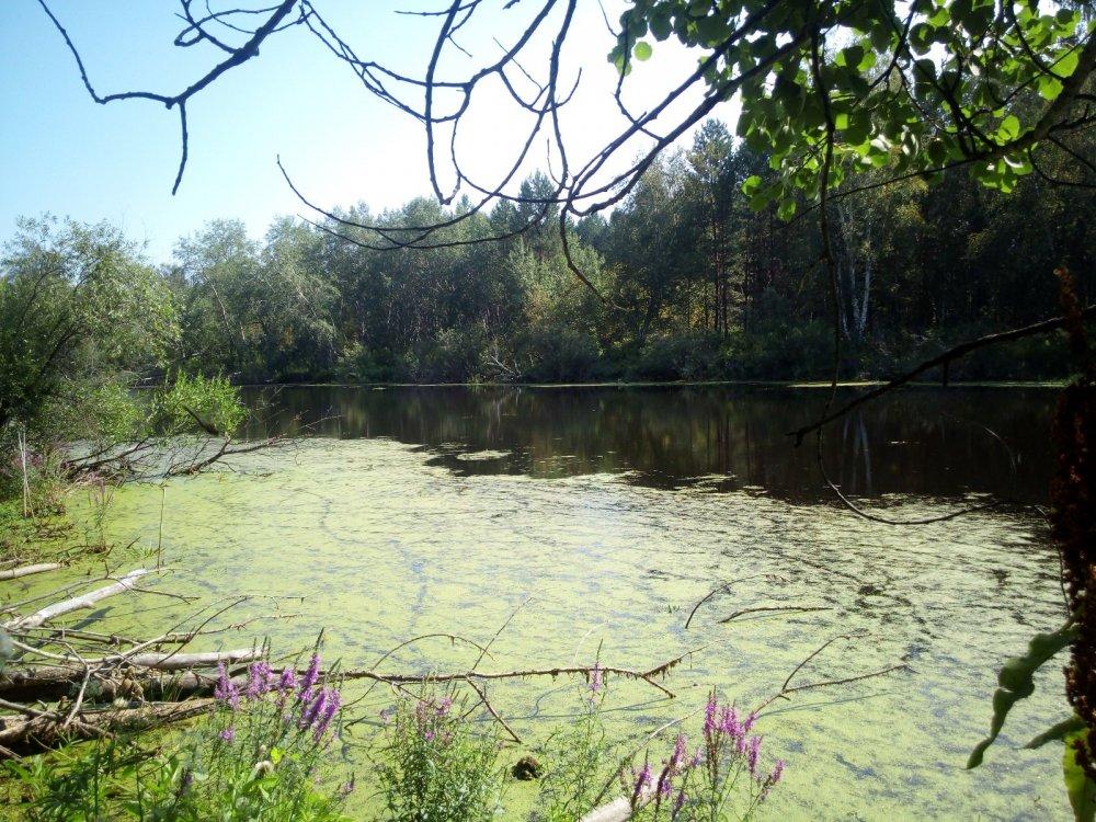 Озеро в Мошкоском бору
