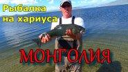 Монгольский хариус/Рыбалка в Монголии/Как наловить хариуса/