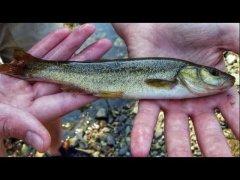 Зимняя рыбалка на КРУПНОГО гольяна. Подлёдная рыбалка.
