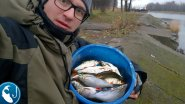 Плотва поздней осенью на фидер. Плотва на реке Буллюпе | Рыбалка с Родионом