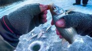Вот это ПЛОТВА!!!Зимняя рыбалка-ловля плотвы на безмотылку-гвоздешарик