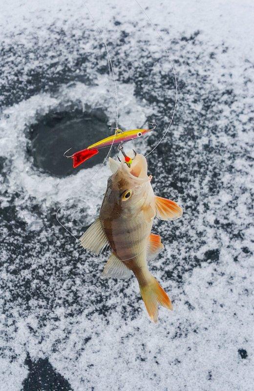Рыбалка в окрестностях Барнаула