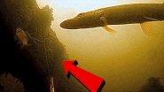 Реакция щуки на живца. Атака щуки! Pike attacks + Подводная съемка