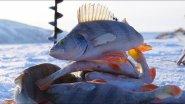 Обской окунь на козу! БЕЗМОТЫЛКА ФОРЕВА (с подводными съемками)