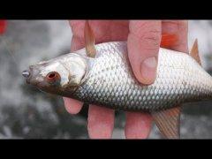 Зимняя рыбалка Ловля плотвы на удочку с зимним поплавком и мормышку плющенка