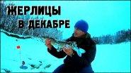 Жерлицы в декабре на таежной реке / КЛЮЕТ!