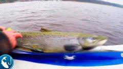 Браконьерская сеть с лососем. Троллинг на реке Лиелупе. Готовим на природе. | Рыбалка с Родионом