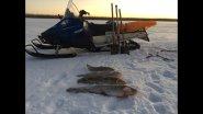 Ловля налима и щуки на уды(жерлицы) и щучьи капканы. Рыбалка 2018.