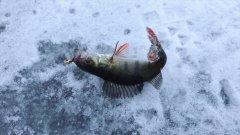 Первая зимняя рыбалка на льду 2018. Открытие сезона. Ловля на мормышку.
