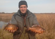 Северные золотые рыбки