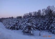 Сказочная Рождественская красота.