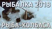 Рыбалка 2018 / рыба колбаса / братья приходько