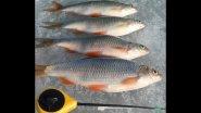 Как поймать рыбу на сломе погоды