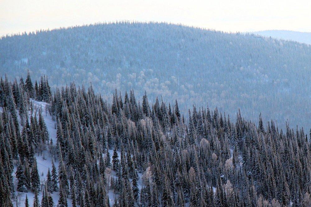 Сибирские леса