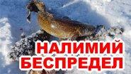 Ловля крупного налима на Байкале + подводное видео