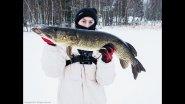 Щуки на 4.2, 4.5 кг и 3 кг с одной лунки. Ловля щуки в глухозимье на жерлицы. Удачная рыбалка.