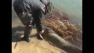 О чем думал этот рыбак? Сом почти на 20 килограмм!