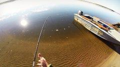 Супер клев окуня летом. Река Печора.
