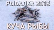 Куча рыбы в глухозимье / рыбалка 2018 / братья приходько