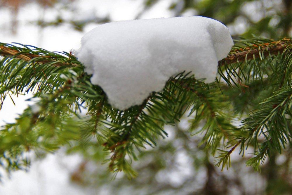 Зима прекрасна