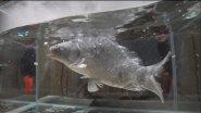 Живая рыба VS жидкий азот. Чудовищный эксперимент..
