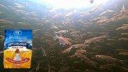 Реакция рыбы на ДРОЖЖИ! Подводная съемка