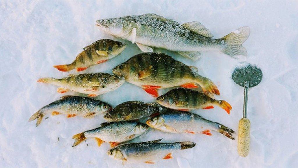 Первоапрельский прогноз клева на 2018 год...  И прочая рыболовная эзотерика