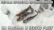 Первая проверка продольников на налима и белую рыбу / братья приходько