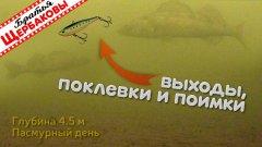 Как «раздраконить» трусливого зимнего судака раттлином. Подводные съемки
