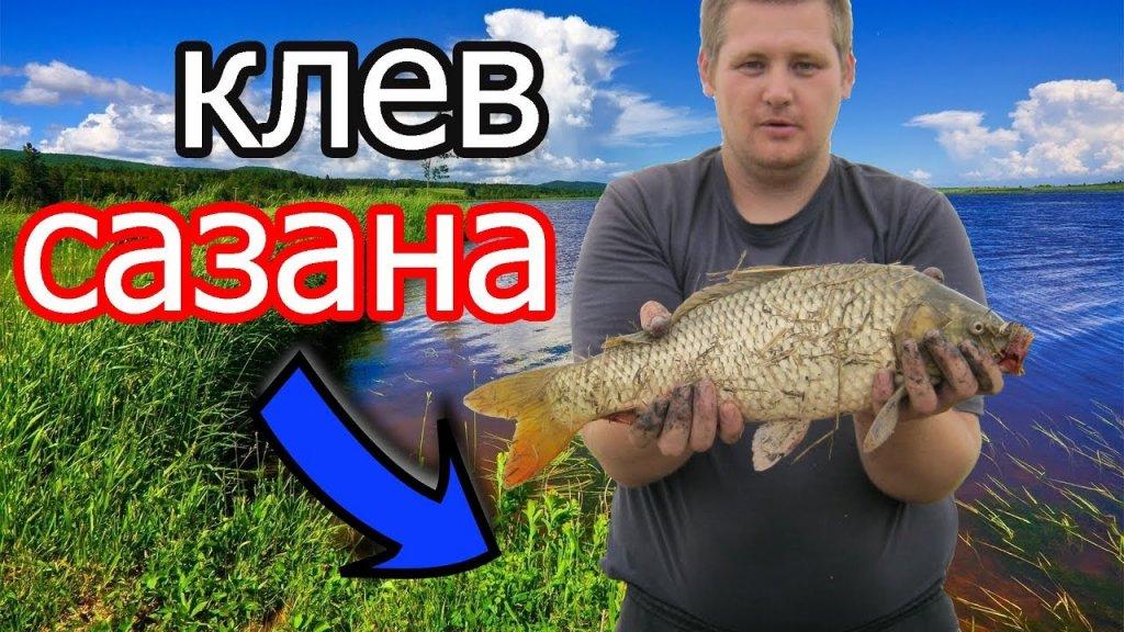 ???? Рыбалка на реке Чулым клевал сазан дуром и клев карася порадовал