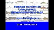 Рыбные паразиты. (Томь, Обь) описторхоз, дифиллоботриоз и др.