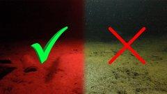 Фантастическая реакция рыбы на свет фонаря ночью