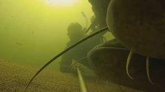 Подводная съемка: огромные сомы и карпы не боятся рыбака!