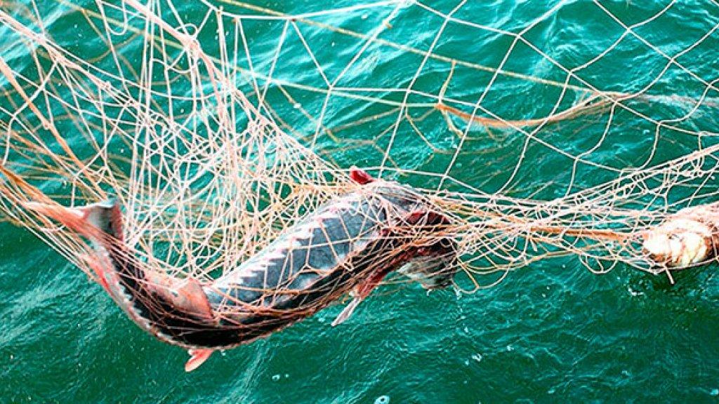Запрет на рыбалку 2018. Сроки нерестового запрета в НСО